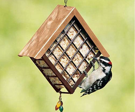 downy woodpecker eating at suet feeder